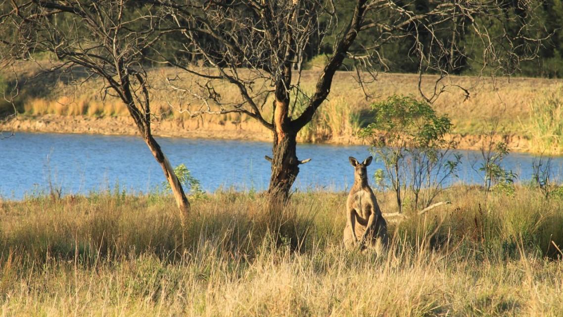 Où voir des animaux en Australie ?